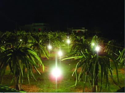 Doanh nghiệp - bạn đồng hành cùng nhà vườn Thanh Long thực hiện liên kết